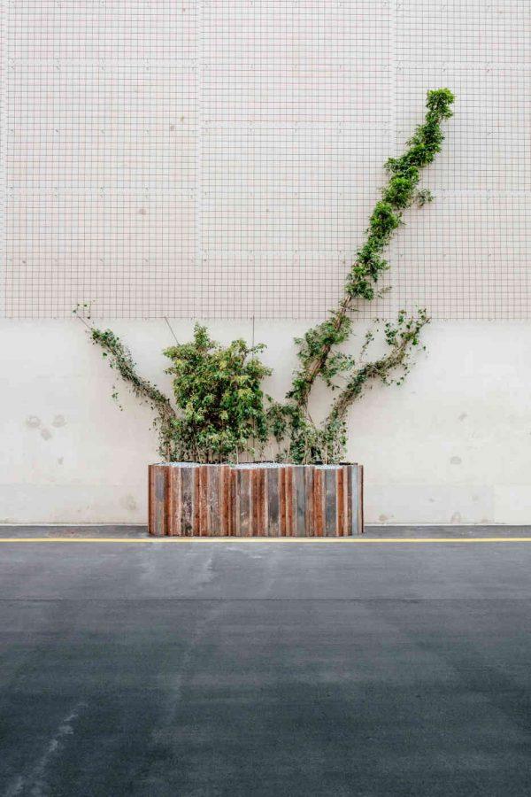 Baum und der Grenzabstand